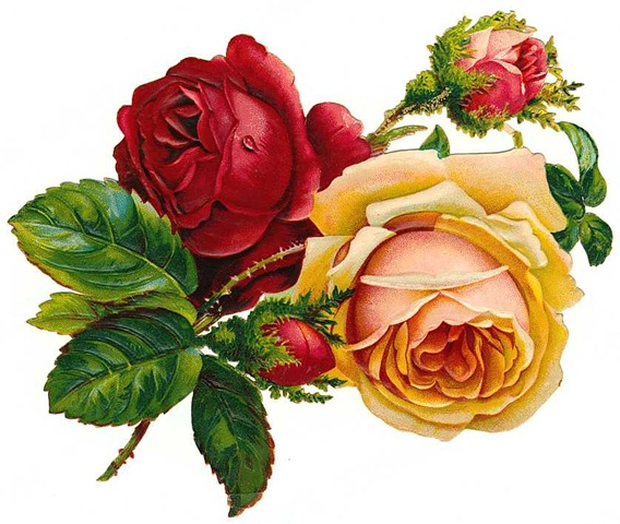 free-vintage-roses-red-and-yellow-with-buds