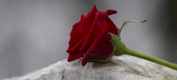grief rose