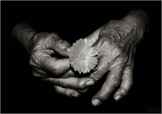old hands with flower