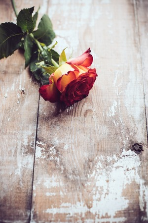41379477 - fresh red rose on an old wooden board, vintage background