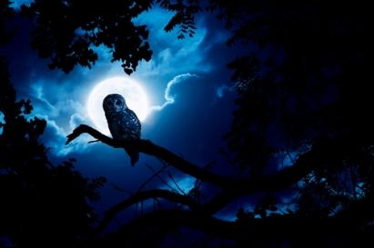 Owl Watches Intently Illuminated By Full Moon On Halloween Night
