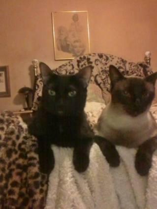 Bibi and Binky