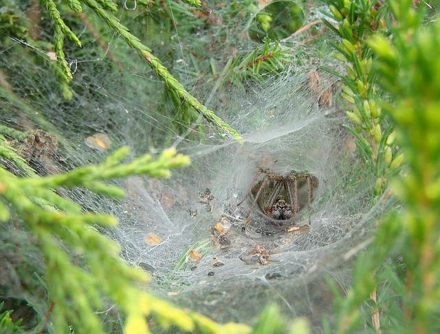 agelenidae-spider-1165641_640