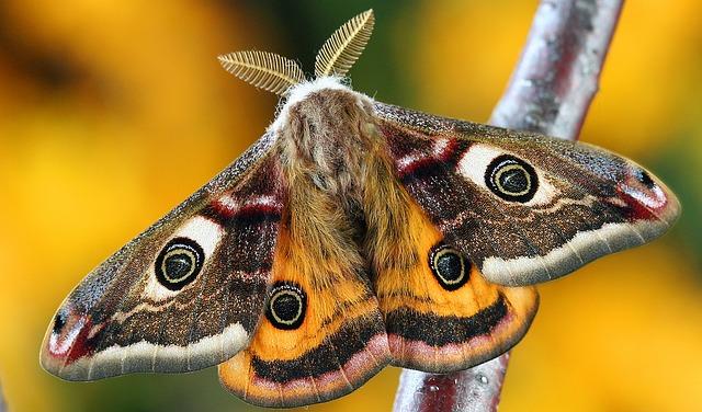 moth-1720869_640