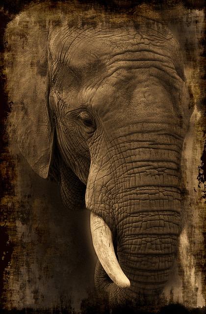 elephant-653693_640