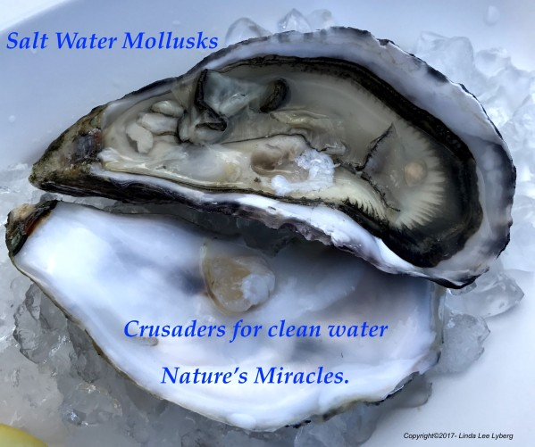 Oyster_on_ice