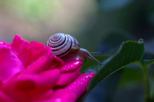 snail-2378225_1280