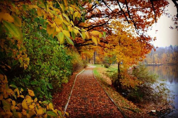 autumn-2516038_1280