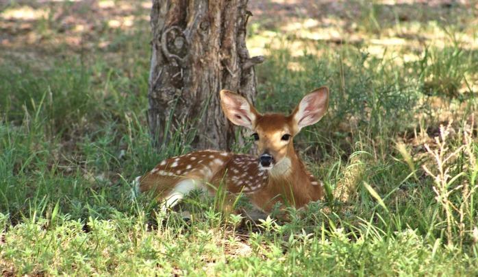 deer-2081638_1280