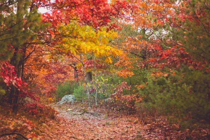 autumn-2595339_1280