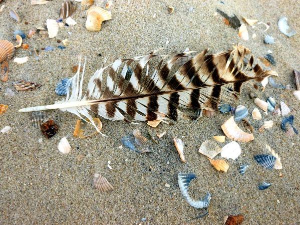 bird-feather-2759383_1280