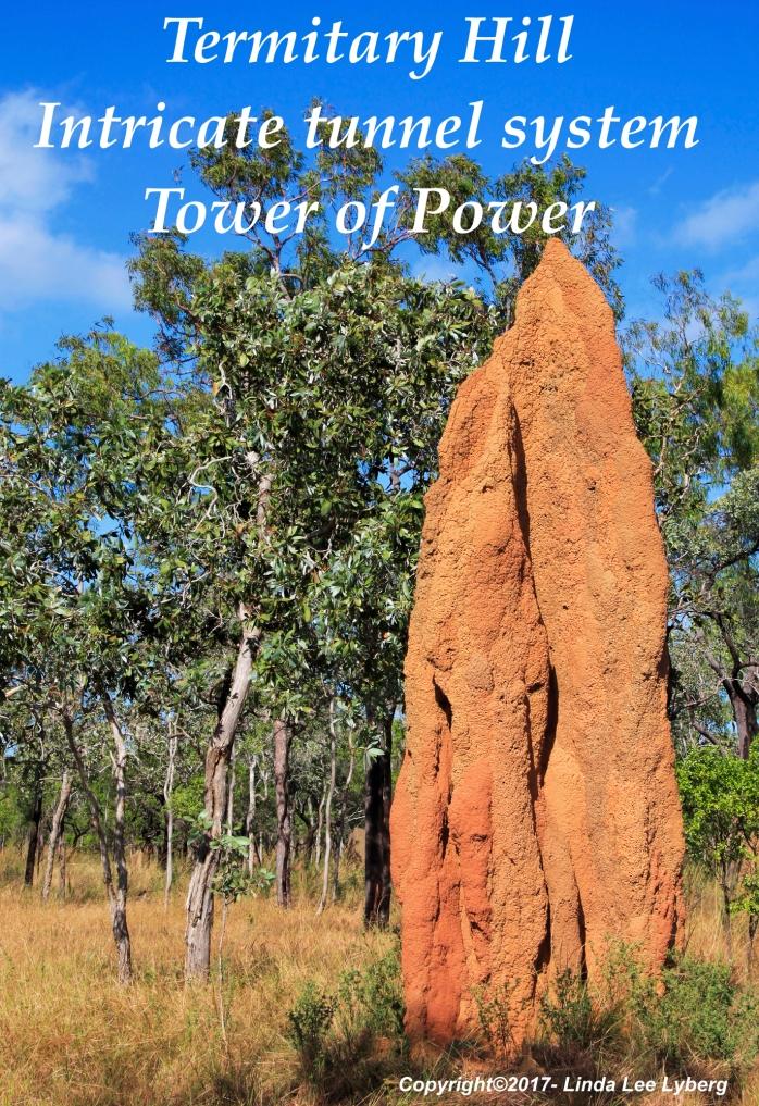 Termite ant hill Australia
