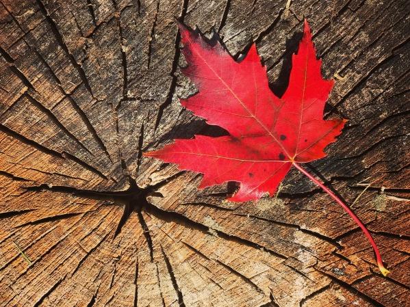 fall-2809845_1280