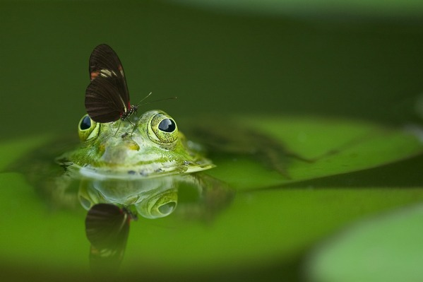 frog-540812_1920