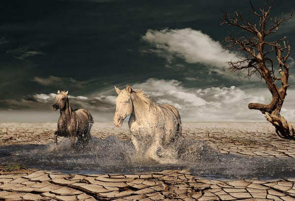horse-2115392_1920