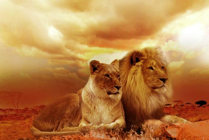 lion-577104_1920
