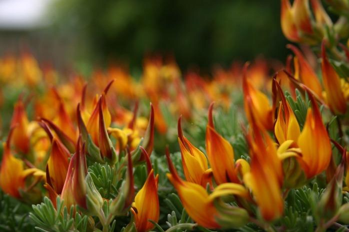 fire-flower-934933_1920