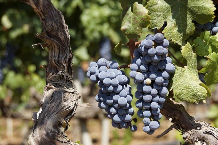grape-2783147_1280