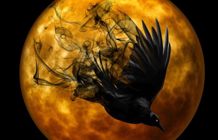 raven-988221_1920