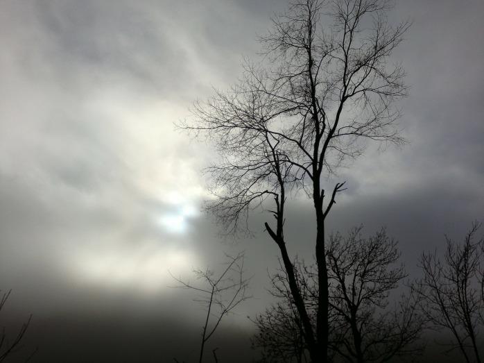 trees-261840_1920