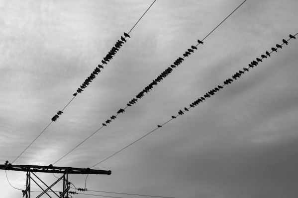 power-lines-690893_1920