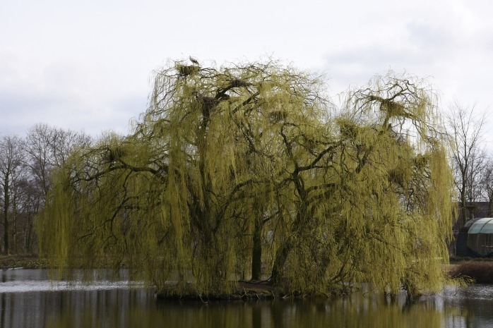 tree-2145995_1920