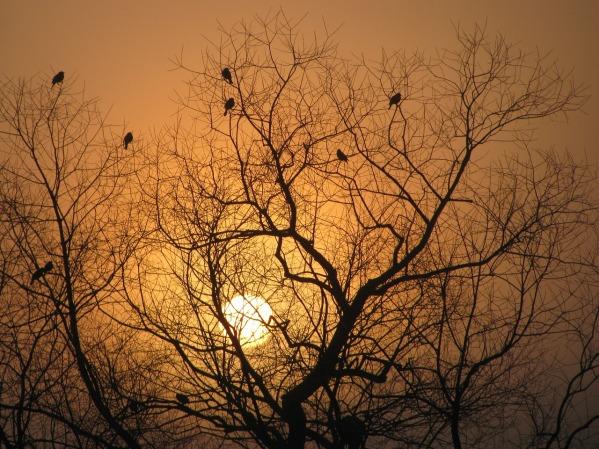 tree-silhouette-1254037_1280