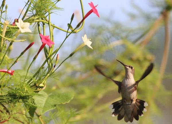 vine and bird
