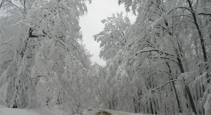 winter-79379_1920