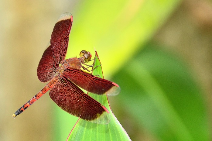 dragonfly-2802235_1920