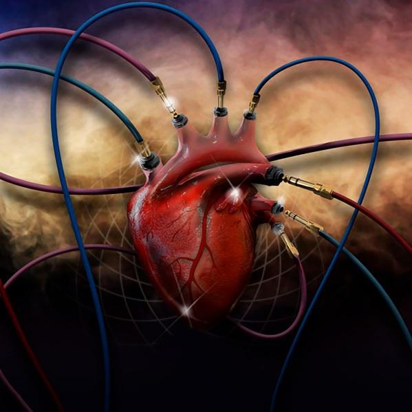 heart-2560532