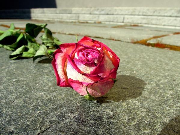 rose-1316905_1920