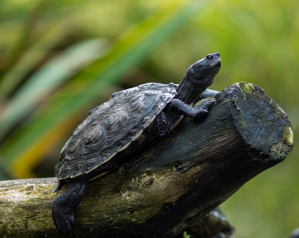 water-turtle-3028605_1920