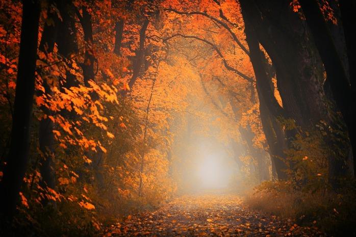 light-3130988_1280