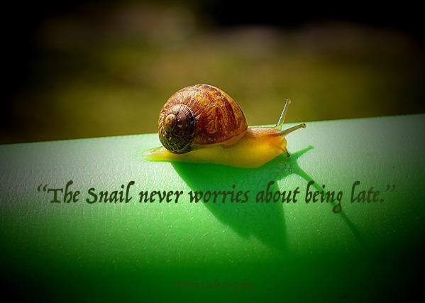 snail-3110893_1920