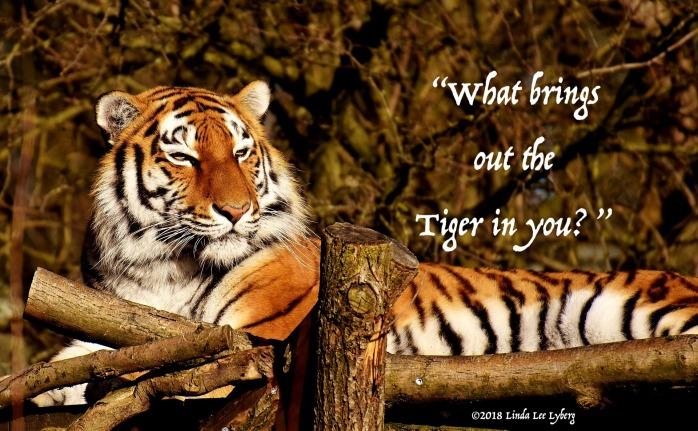 tiger-3161260_1920