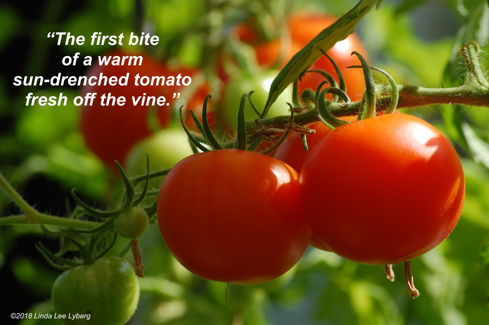 tomato-2643774_1920-2