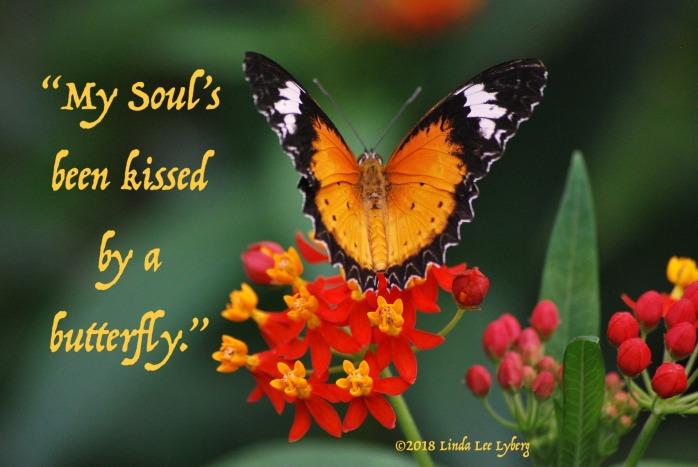 butterfly-1984934_1920