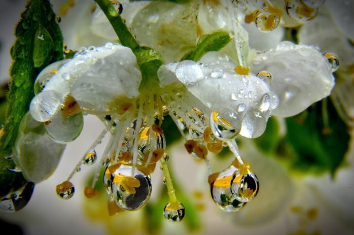 flower-1379716_1920