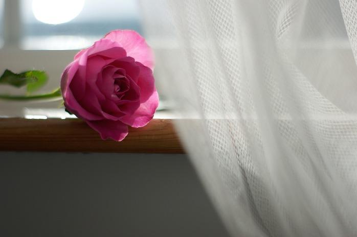 flower-3229869_1920