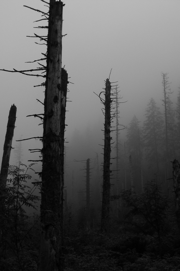 forest-945600_1920