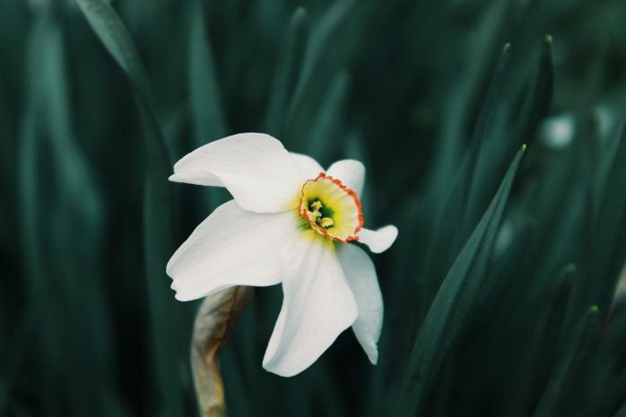 flower-3236204_1920
