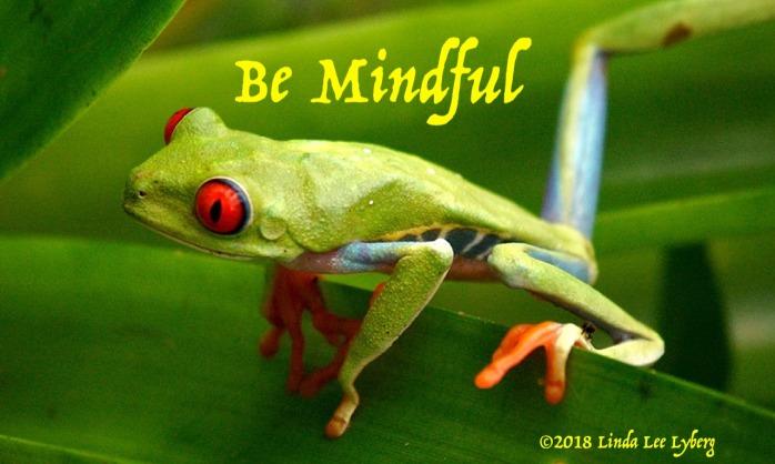 frog-647765_1280
