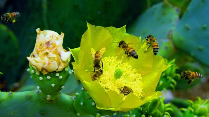 honey-1209747_1920