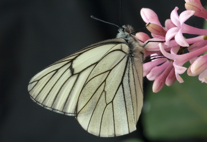 nature-wing-white-flower-petal-insect-796678-pxhere.com