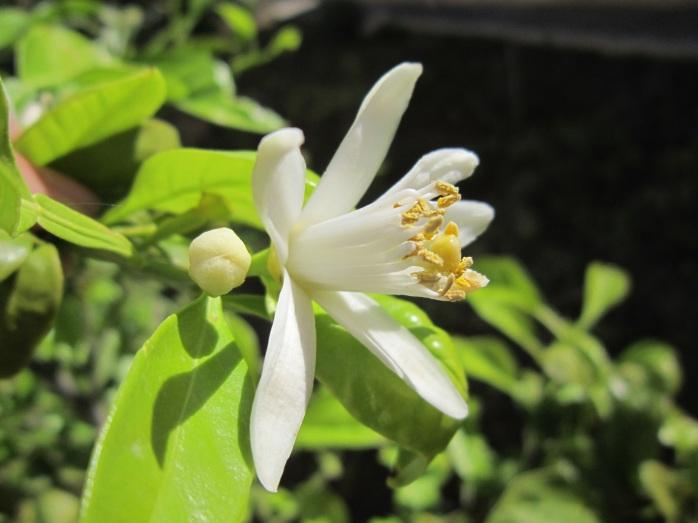 plant-sun-white-flower-bloom-spring-1412397-pxhere.com
