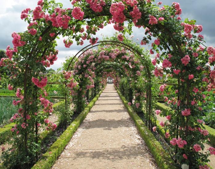 roses-2245612_1280