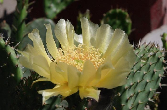 cactus-2701273_1280