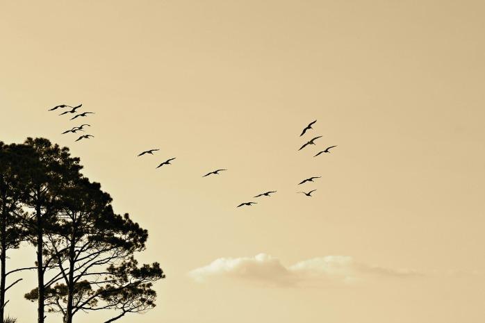 birds-1835510_1280