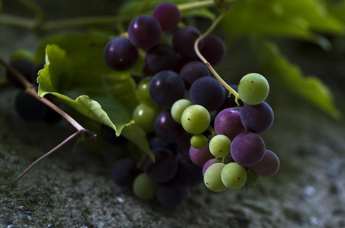 grapes-928579_1280